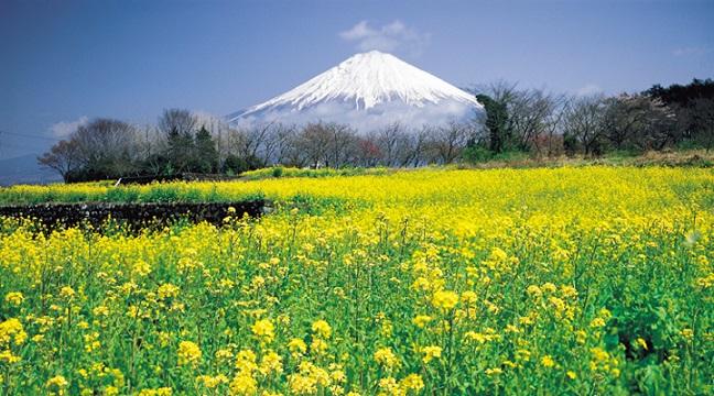 Shizuoka – mảnh đất yên bình của núi Phú Sỹ