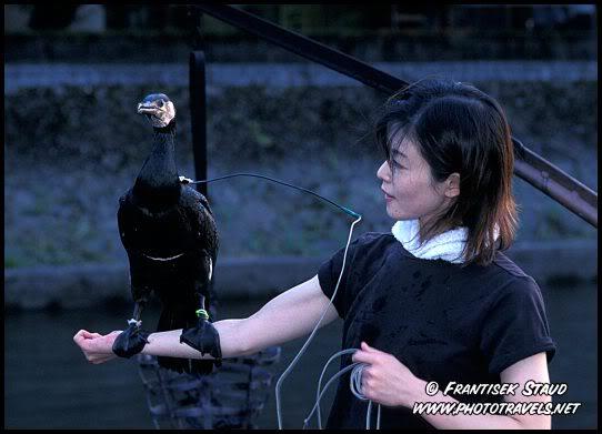 Tỉnh Aichi - Nhật Bản: Đánh bắt cá bằng chim cốc