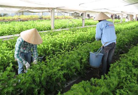 Nhật Bản tăng cường tuyển chọn thực tập sinh nông nghiệp