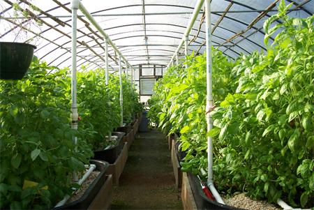 24 Nữ làm nông nghiệp tại Fukuoka tháng 6/2014
