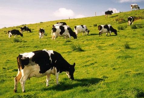8 nữ làm chăn nuôi bò sữa tại Hokkaido tháng 7/2014