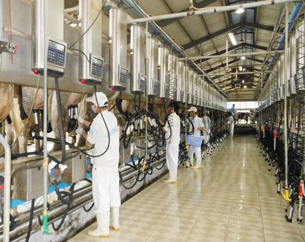 10 nam bò sữa tại Toyama tháng 12/2014
