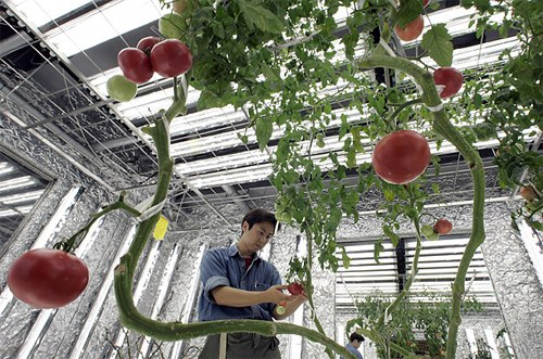 Tại sao Nhật Bản cần tuyển dụng số lượng lớn lao động làm nông nghiệp