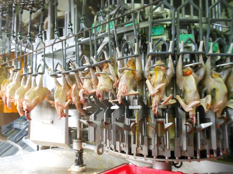 6 Nữ làm chế biến thịt gà tại Shizuoka tháng 5/2015