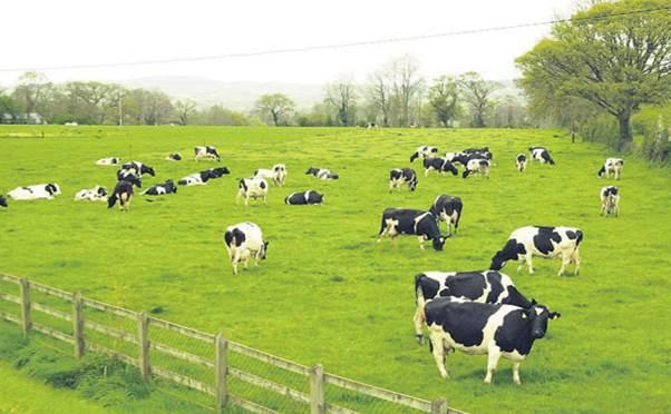 Tuyển gấp 12 Nữ làm chăn nuôi bò sữa tại Hokkaido lương cao