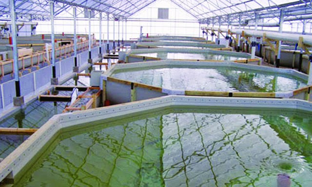 6 Cặp vợ chồng nuôi trồng thủy sản tại Hiroshima tháng 6/2015