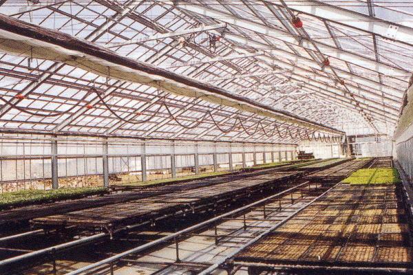 Cần tuyển 10 Nam làm nông nghiệp tại Kumamoto bay gấp