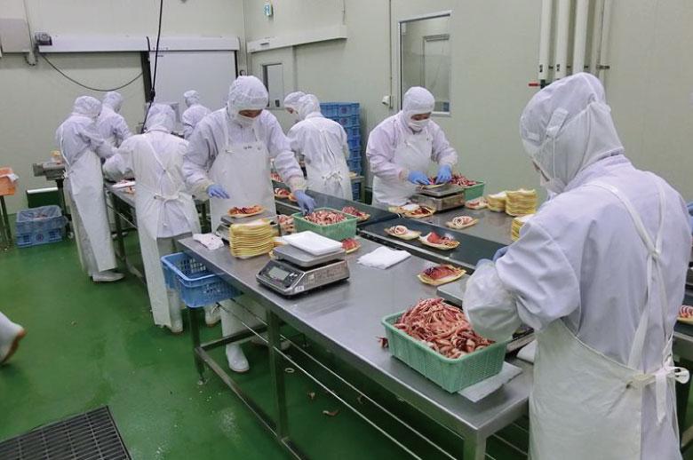 9 Nữ chế biến thủy sản tại Shizuoka tháng 7/2015