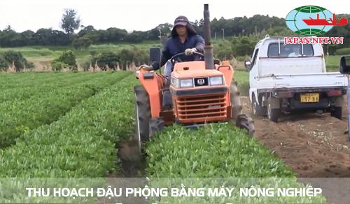 Làm nông nghiệp ai
