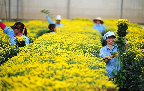 Tuyển 10 nữ trồng rau màu làm việc tại Nhật Bản tháng 09/2015