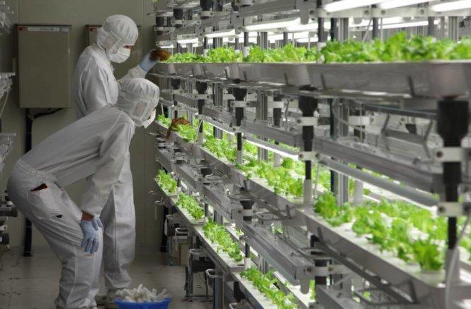 Kỹ sư nông nghiệp muốn đi lao động tại Nhật Bản