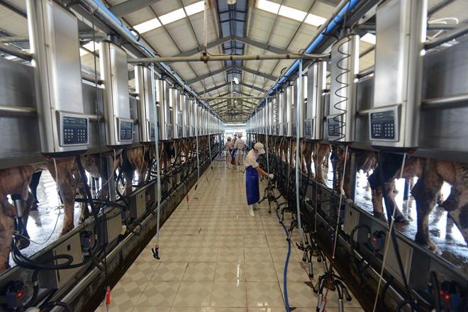 2 xí nghiệp tuyển lao động trang trại bò sữa tại Shiga và Hokkaido tháng 1/2016