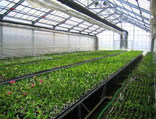 Tuyển lao động làm trồng rau trong nhà kính tại Nhật Bản tháng 02/2017