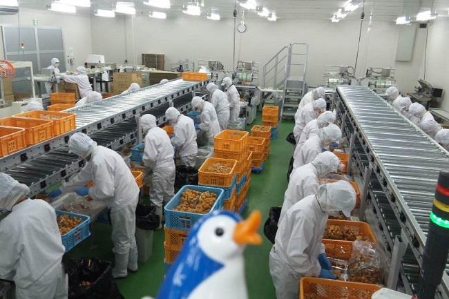 Tuyển 20 nam làm trồng nấm tại Nhật Bản xuất cảnh tháng 01/2017