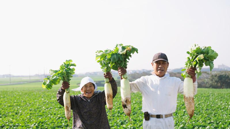 Xuất khẩu lao động Nhật Bản đơn hàng nông nghiệp tháng 04/2017