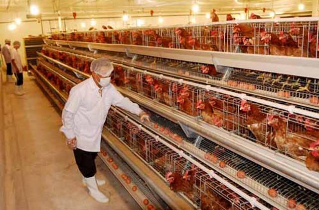Tổng quan về ngành nông nghiệp chăn nuôi ở Nhật Bản