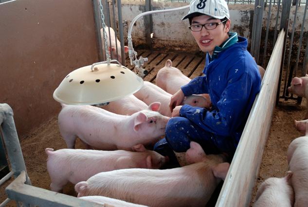 Đơn hàng chăn nuôi lợn lương cao tại Nhật Bản tháng 1/2017