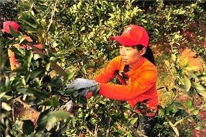 Người dân Bắc Giang làm giàu từ đi xuất khẩu lao động Nhật Bản