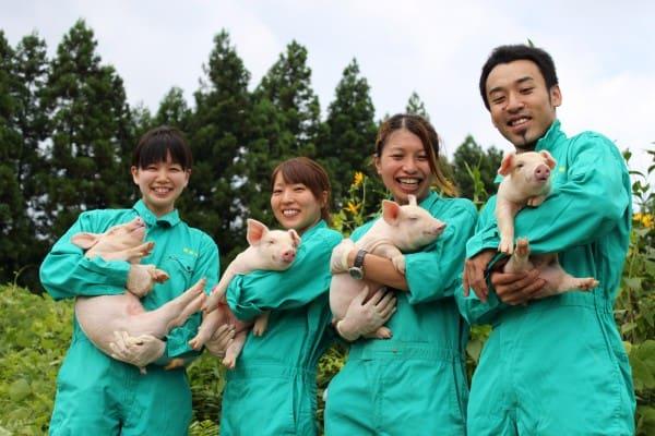 Đơn hàng chăn nuôi lợn lương cao tại Nhật Bản tháng 04/2017