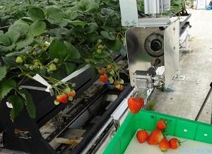 Chiêm ngưỡng nền nông nghiệp nhà kính tự động của Nhật Bản