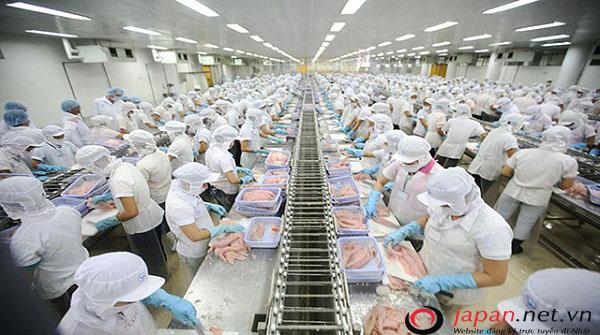 Tuyển gấp 155 lao động nữ tỉnh Bắc Ninh đi XKLĐ Nhật Bản ngành chế biến thủy sản