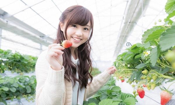 Xuất khẩu lao động Nhật Bản đơn hàng nông nghiệp tháng 07/2017