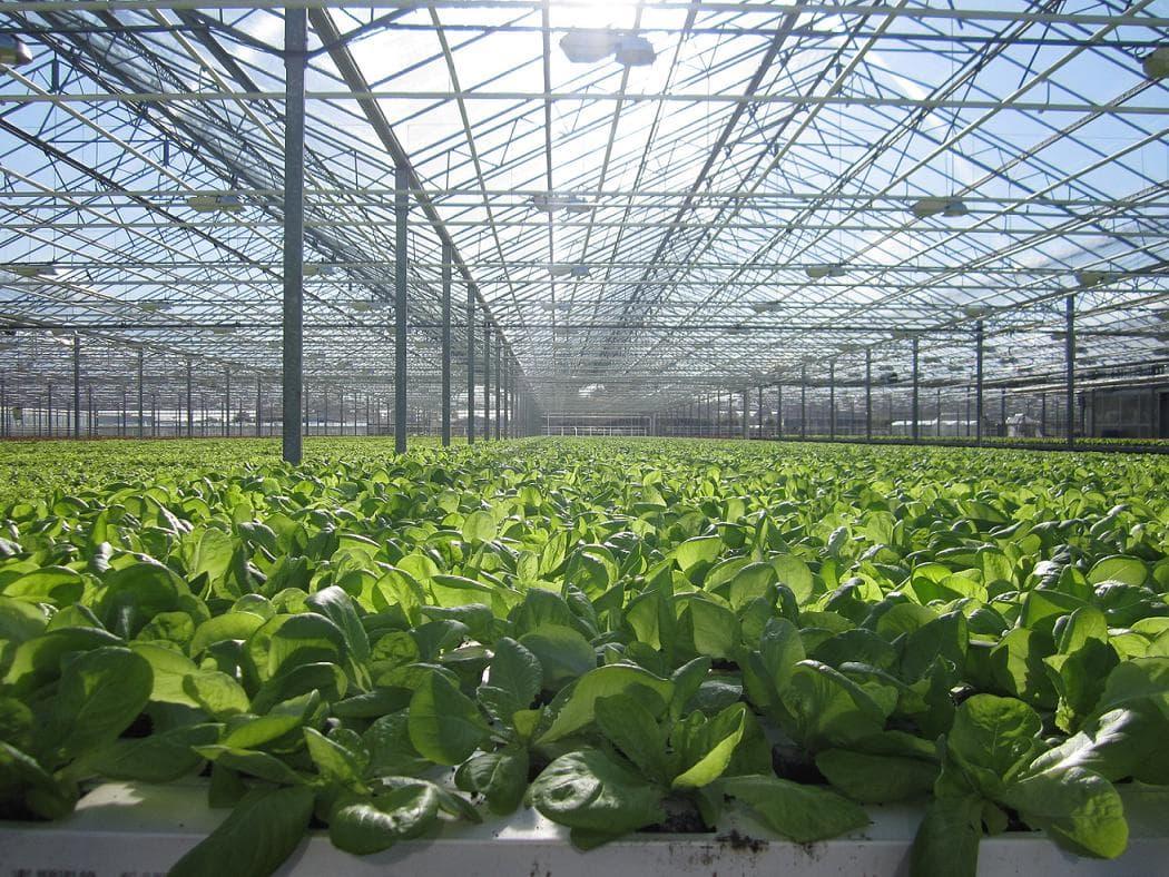 Tuyển lao động làm trồng rau trong nhà kính tại Nhật Bản tháng 12/2017
