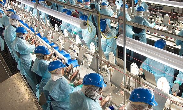 Tuyển 30 nam/nữ đơn hàng chế biến thịt gà tại Hokkaido Nhật Bản