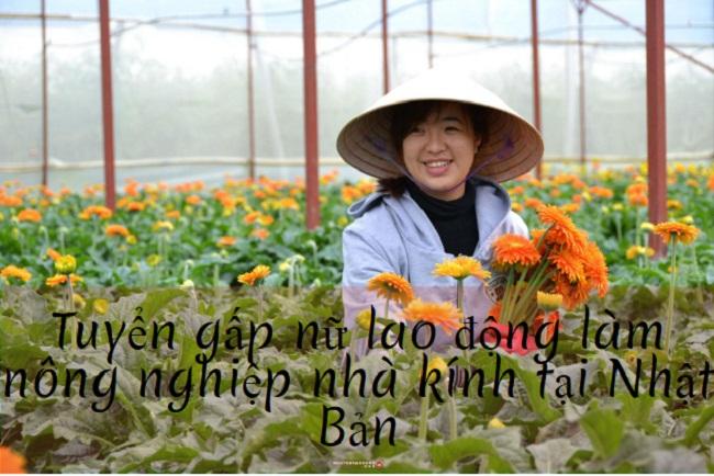 Tuyển 21 lao động nữ làm nông nghiệp nhà kính tại Hokkaido, Nhật Bản