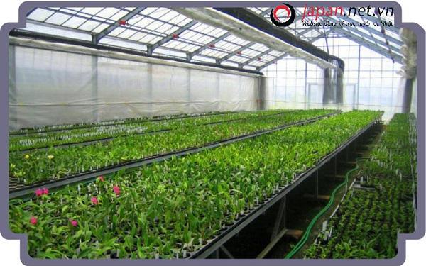 XKLĐ làm nông nghiệp tại Nhật Bản có những công việc gì?
