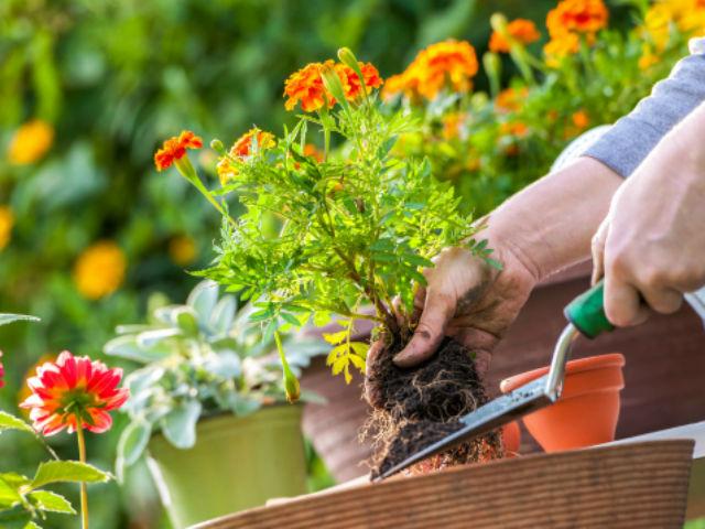 Đơn hàng xuất khẩu lao động làm trồng hoa tại Nhật Bản tháng 10/2017