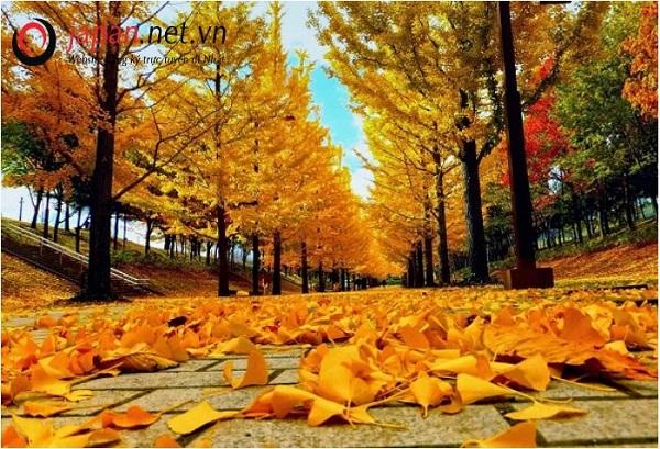 Ngắm nhìn Nhật Bản tuyệt đẹp trong mùa thu lá đỏ.