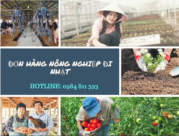 Xuất khẩu lao động Nhật Bản đơn hàng nông nghiệp tháng 04/2018