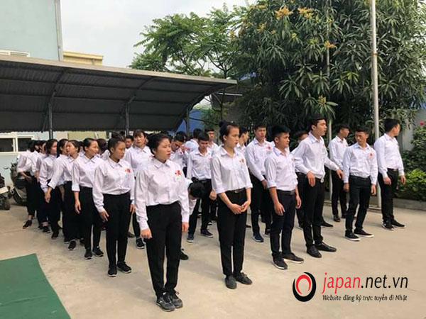 Thi tuyển đơn hàng chăn nuôi bò sữa tai công ty TTC Việt Nam