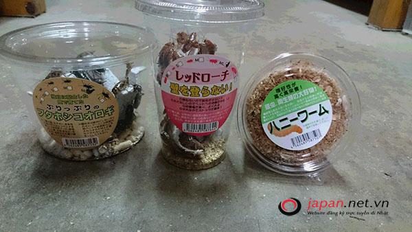 Phát sốt với hình ảnh gián làm thú cưng tại siêu thị Nhật, 100 nghìn/ hộp