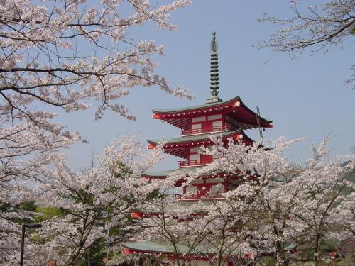 Tôi đã thực sư thay đổi khi bước sang Nhật Bản - mảnh đất diệu kì