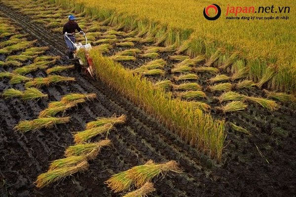 tìm hiểu nền nông nghiệp kiểu mẫu nhật bản