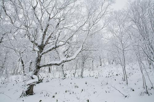Nét đẹp Bắc Hải Đạo - Hokkaido