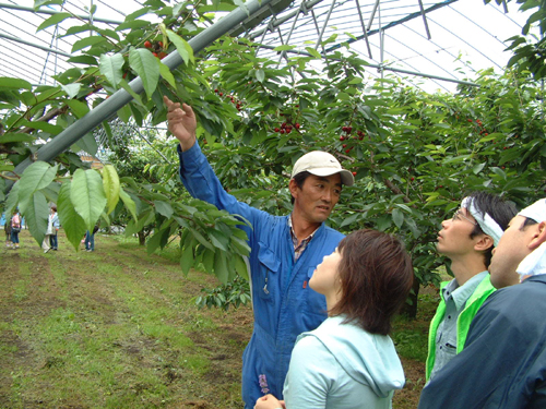 6 nam làm nông nghiệp tại SHIZUOKA-KEN 1/2014