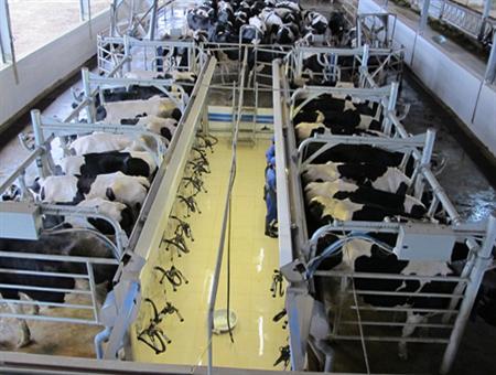 36 nữ làm trang trại chăn nuôi tại Hokkaido tháng 8/2014