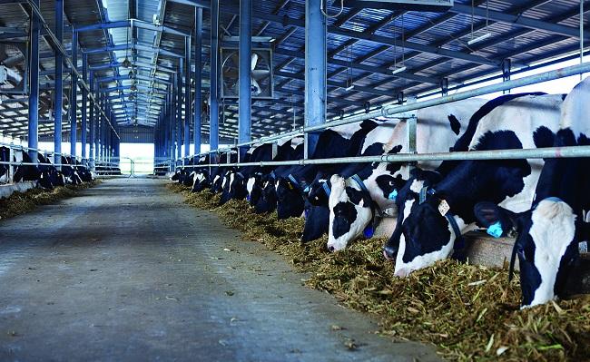 6 Nữ chăn nuôi bò sữa tại Hokkaido tháng 08/2014