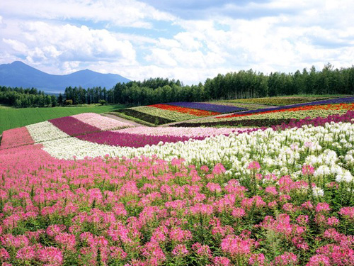 Xuất khẩu lao động tại Hokkaido - Nhật Bản
