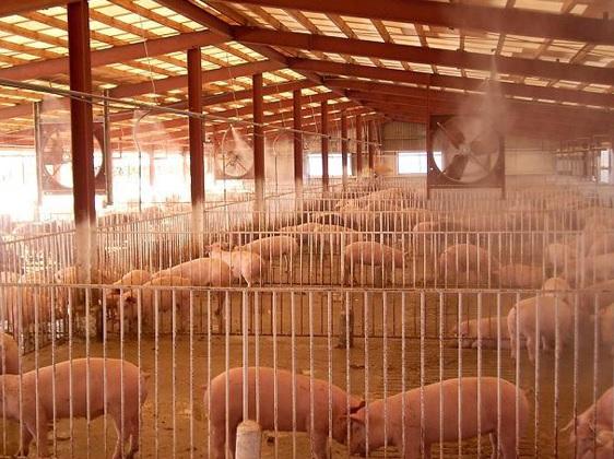 12 Nam làm trang trại gia súc tại Toyama tháng 2/2015