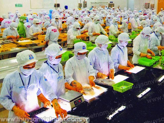 18 Nữ làm chế biến thủy sản tại Toyama tháng 6/2015