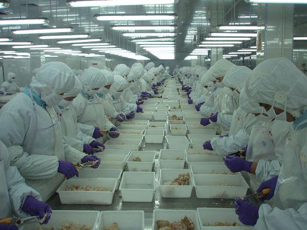 95 Nữ làm chế biến thủy sản tại Hokkaido lương cao