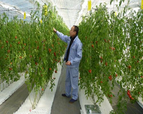 Khi người Việt Nam đi học làm nông dân ở Nhật Bản