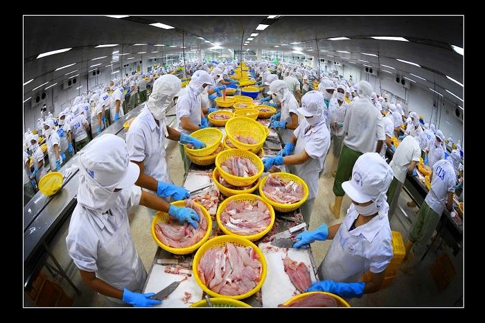 12 Nữ làm chế biến thủy sản tại Toyama tháng 7/2015