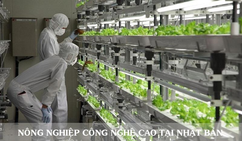 Nông nghiệp Nhật Bản - Thu hoạch và đóng gói nông sản