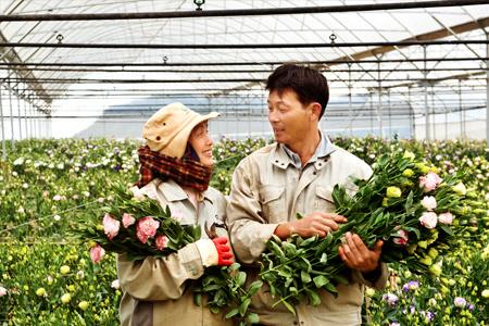 Tuyển 20 nam làm nông nghiệp tại Nagano xuất cảnh nhanh, lương cao