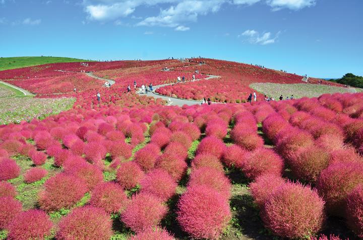 Ibaraki Nhật Bản giáp danh với tỉnh nào?